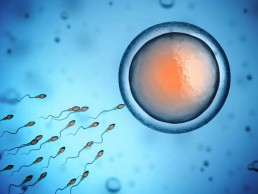Fertility-and-gynaecology-academy-Human-sperm-and-egg-cell